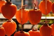 autumn_098