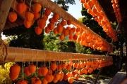 autumn_099