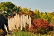 autumn_103