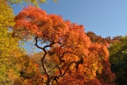 autumn_106