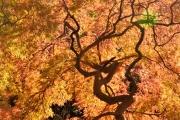 autumn_107