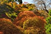 autumn_108