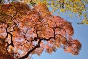 autumn_110